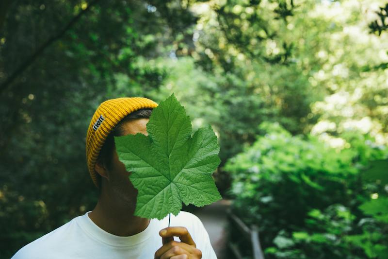 Yellow Leaf Male